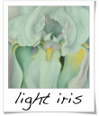 Light Iris - Georgia O'Keefe - 1924